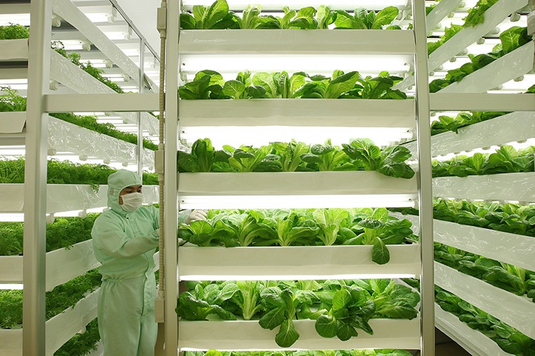 How to feed an extra 2 billion people by 2050? A shift in how we grow food.