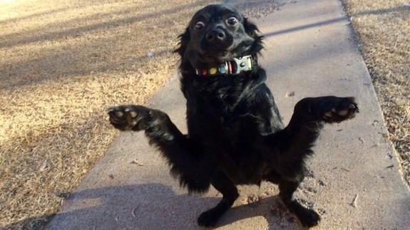 Adorably weird shruggie dog gets a equally weird Photoshop battle